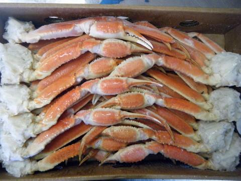 【シーズン到来】ズワイガニ5kg/3Lを2箱セット! 特大の蟹肩を34肩!物凄い量です!_5kg×2箱=10kgです!