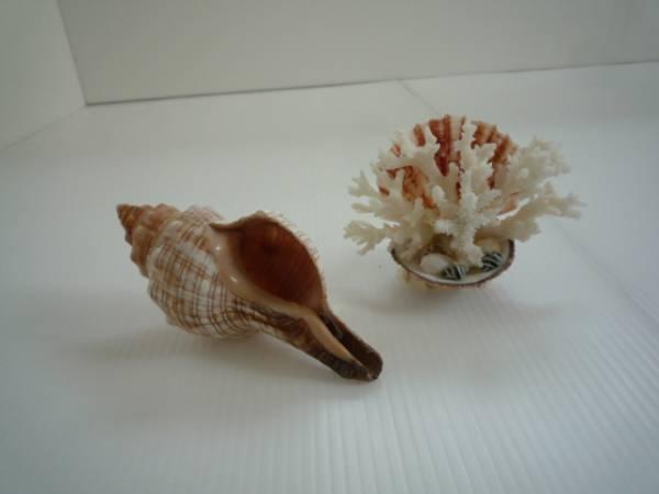 【お得!!】★置物 2点セット★ 貝殻 サンゴ風貝殻
