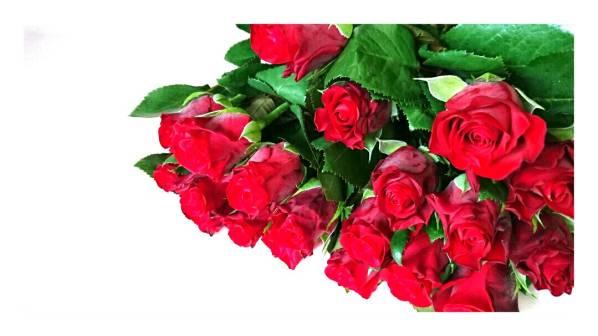 花のクローバー》生花 一輪 良品 赤バラ 薔薇 1本 切花 +300円で花束にできます。 生花 同梱 可能 _画像1
