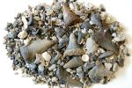 サメ 歯 化石 メガロドン アオザメ など 堆積物 200g ZZ93