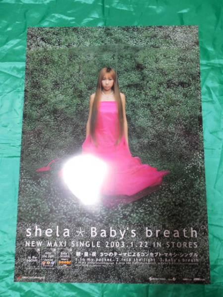 shela シェラ Baby's breath ベイビーズ B2サイズポスター
