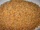 ◆平成28年産 小麦 麦 さとのそら 地粉 うどん 1kg◆No14