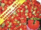 ●化学農薬不使用栽培●生産者直売●完熟ゆめのか・紅ほっぺ苺混合バラ詰め無選別2kg(風袋込)