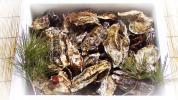 送料無料!日本三景松島産 殻付き牡蠣 無選別牡蠣4kg 加熱用 即日発送も発送予約も2週間以内可能です。洗浄済みです。