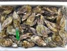 瀬戸内海産 殻付き牡蠣 Lサイズ 10キロ