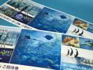 【送料込み】新江ノ島水族館 招待券2枚セット