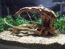 23【流木】ブランチウッド★アーチ形★検 水槽 プレコ 熱帯魚
