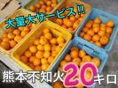 大量大サービス熊本産不知火デコポン20キロ1円スタート4