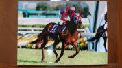 三冠牝馬 スティルインラブ 秋華賞(GⅠ) 生プリント写真 2Lサイズ