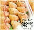 FOODISH/1円スタート熊本県産 化粧箱付 白いちご 淡雪 あわゆき(9~15粒) お祝い、贈答用に最適です!!