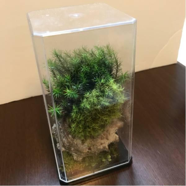 天然苔のテラリウム(C1)_画像3