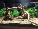 75【流木】ブランチウッド2本★大木形★検 水槽 ADA 熱帯魚