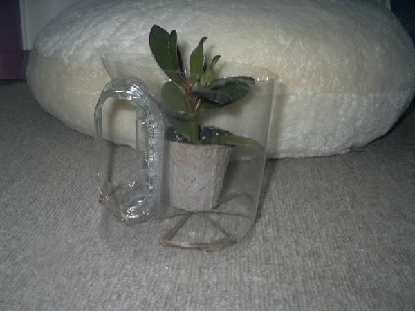 開運 金のなる木本舗の花月 風水招福 多肉植物 一家に一鉢、貴方のお家にも、金運上昇!! ~写真以上の品です。~_参考:ペットボトルの花置き