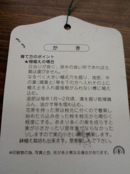 次郎柿(甘カキ)苗木_画像2