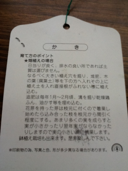 次郎柿(甘カキ)接木苗_画像2
