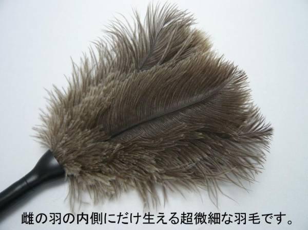 【プラモデルのホコリ取り】戦闘機やジオラマのホコリ取り.雌ダチョウだけの1級羽毛です。検)日本軍式戦車パンサーレオパルドアメリカ軍