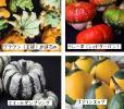 野菜種◆カボチャ種/おもちゃかぼちゃ4種Set/ハロウィン・装飾に