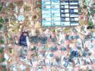 海洋堂 フィギュア 動物 いろいろ まとめて オマケ おまけ 食玩 大量 深海魚 蟹 イルカ ウミガメ サメ 潜水艦 クジラ 鯨 物産展 沖縄 四国