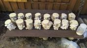 天然カワラ材・産卵木⑥