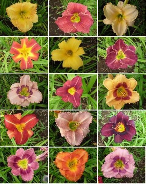 今まで交配して咲かせた花の一例です♪