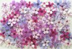 押花素材:芝桜 ①