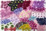 押花素材:小花いっぱい ①