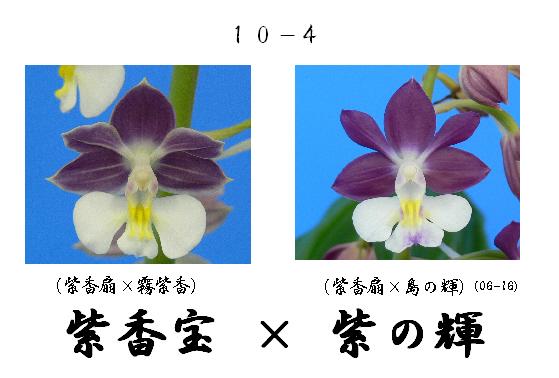 えびね蘭★エビネラン★見る価値有り★香りあり★2_画像3