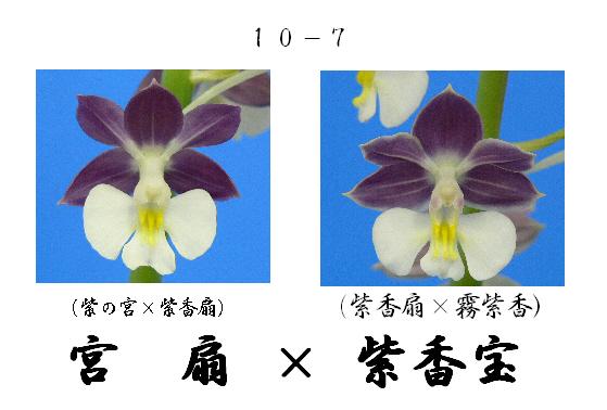 えびね蘭★エビネラン★見る価値有り★香りあり★5_画像3