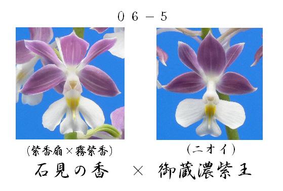 えびね蘭★エビネラン★見る価値有り★香りあり★6_画像3