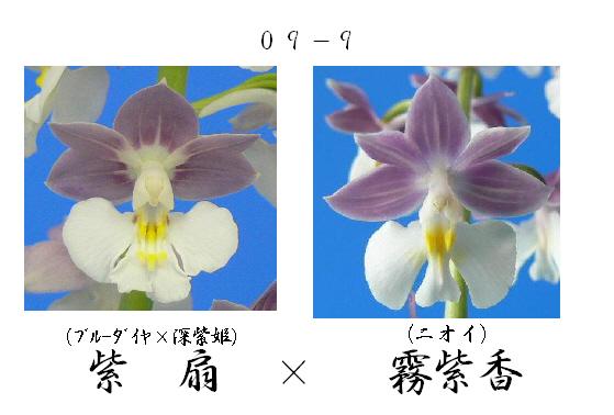 えびね蘭★エビネラン★見る価値有り★香りあり★8_画像3