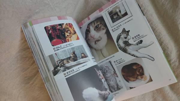 カワイイ!! 道民にゃんこ 北海道新聞社編 写真集 _画像2