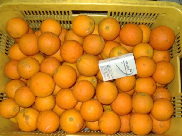 ■バレンシアオレンジ10Kg 2S~Mサイズ 家庭用 ■和歌山県下津