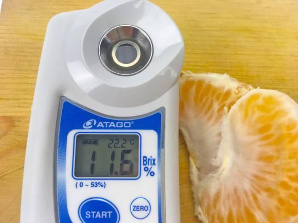 試食時実測糖度は11.6度(個体差あります)