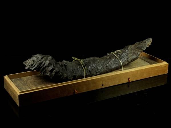 ◆廻◆ 古美術品 龍脳樹 御神木 83cm 5kg 香木 箱付 旧家蔵出 [G248]TP