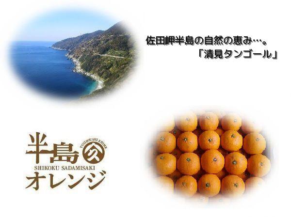 愛媛県・佐田岬半島の自然の恵み!訳あり【清見タンゴール】約10kg