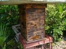 日本蜜蜂 ミツバチ みつばち 今春入居 きんりょうへん M2