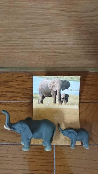バンダイBANDAI 世界自然動物 アフリカ編 ゾウ親子B フィギュア食玩_画像1