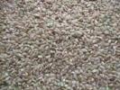 鳥えさ用くず米(5キロ×2個)10キロ(ちゃぼ、にわとり、ハト、うずら等の小動物)