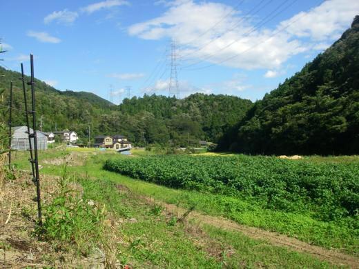 農家直送 兵庫県猪名川町産 野菜詰め合わせ 農家直送だからできるこの価格と品質 お得