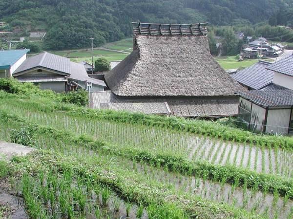 農家直送 兵庫県猪名川町産 野菜詰め合わせ 農家直送だからできるこの価格と品質 お買い得