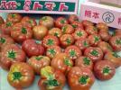 【熊本県産】 家庭用トマト 大量 4K箱入×2箱