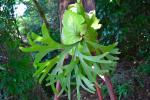 P.Mt.kitshakood リドレイx コロナリウム ビ