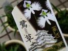★お花処★涼しげ斑入り♪サギソウ【銀河】4号鉢*山野草*鷺草