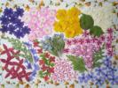 ♪押し花材料 小花いっぱい♪