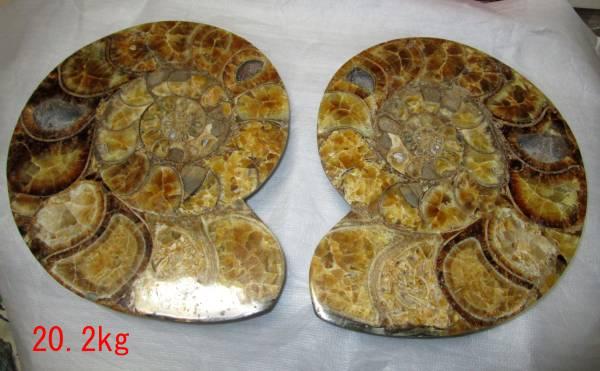 特大 ペア アンモナイト化石 スライス 20.2kg 直径37cm 同梱不可_画像1