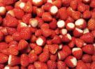 送料無料 冷凍苺 イチゴ 2kg(500g×4袋) 真空パック 佐賀県産 スムージー ジャム ジュレ アイス…