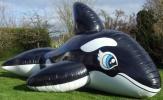 IW製 超巨大 シャチフロート つやあり 黒色 空ビ バルー