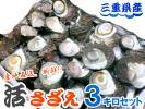 【 天然 活サザエ 3kg入り 】 三重県産/漁師直送/律丸