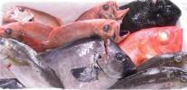 1 ●福袋●駿河湾獲れたて直送 鮮魚セット 旬魚をご家庭に!