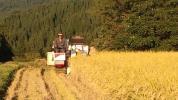 ☆訳あり!☆28年産☆新潟県産コシヒカリ!玄米30kg☆ほたる舞う棚田の農家のお米